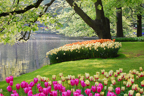 dutch destinations  keukenhof, the garden of europe  ferry, Natural flower